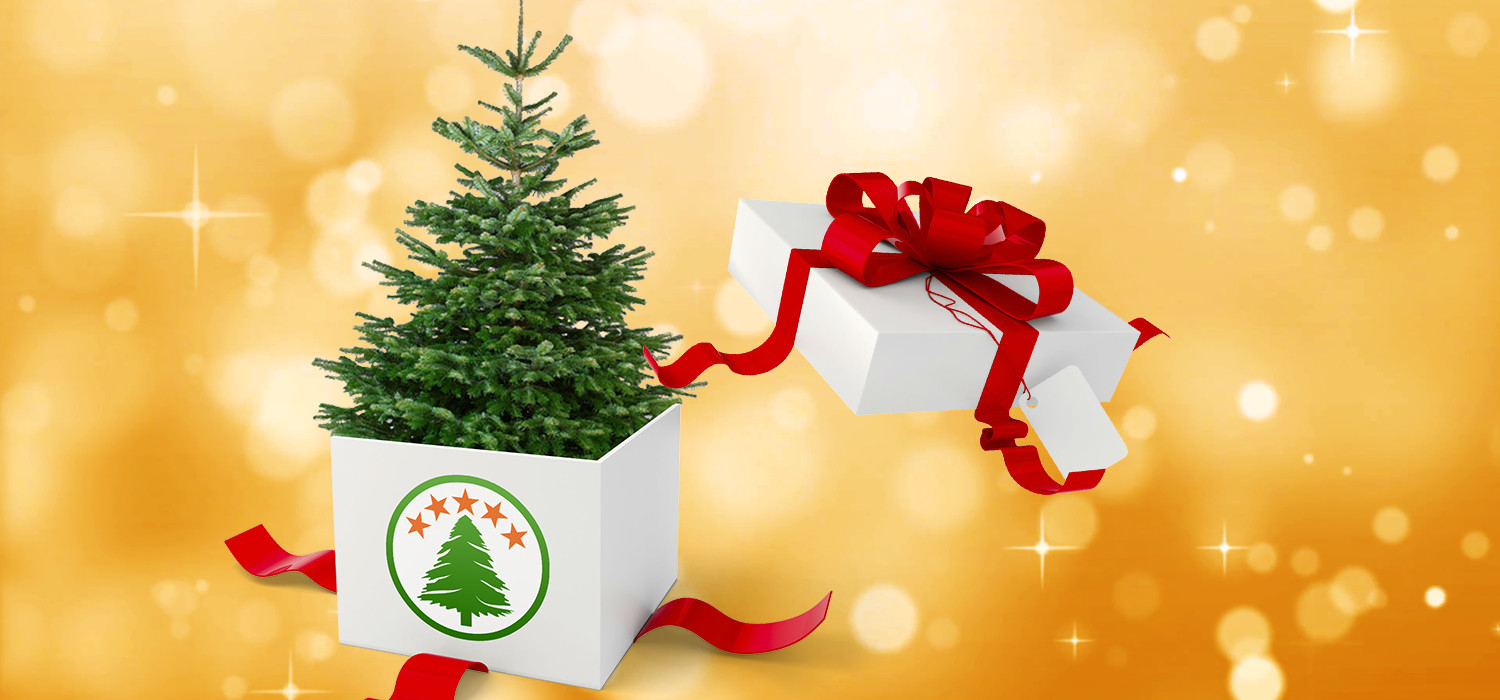 Give a Christmas tree as a gift from your company
